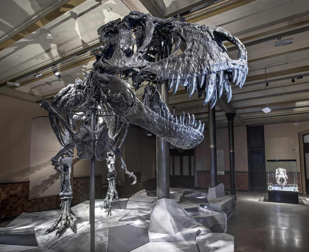 Skelett des T. rex im Ausstellungsaal des Berliner Naturkundemusem Foto: Carola Radke, Museum für Naturkunde Berlin
